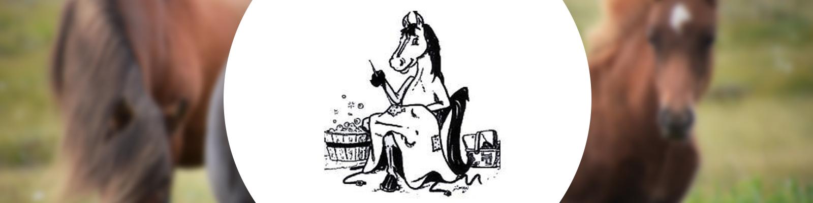 Pferdedeckenwaschservice aus Datteln